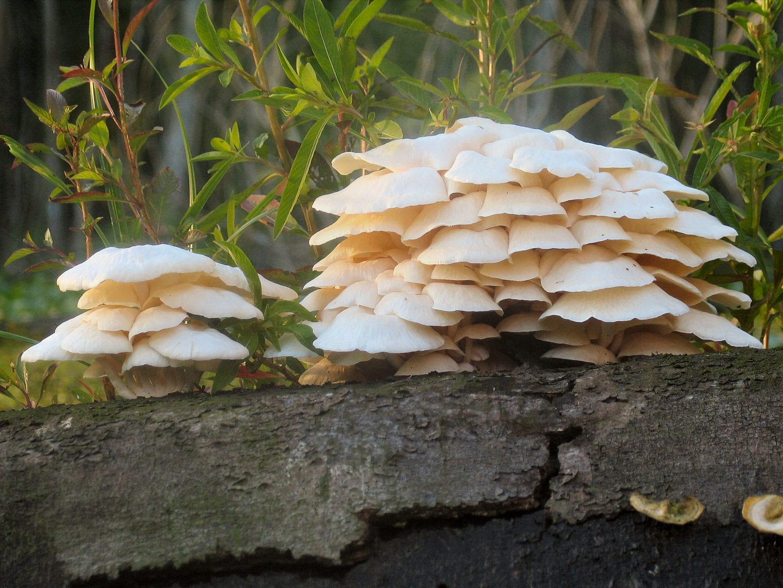 Mushrooms growing on a log