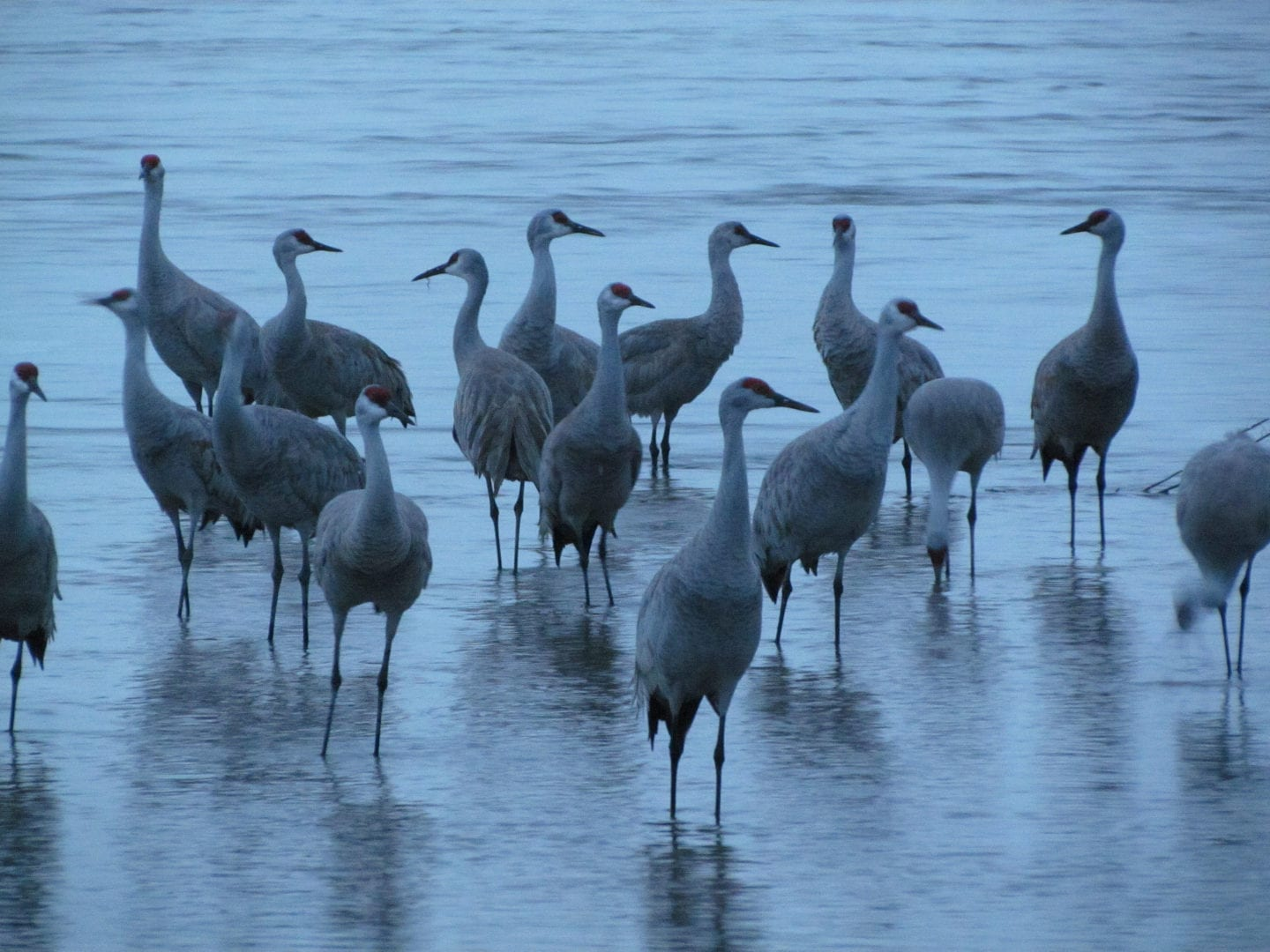 A flock of birds standing on water