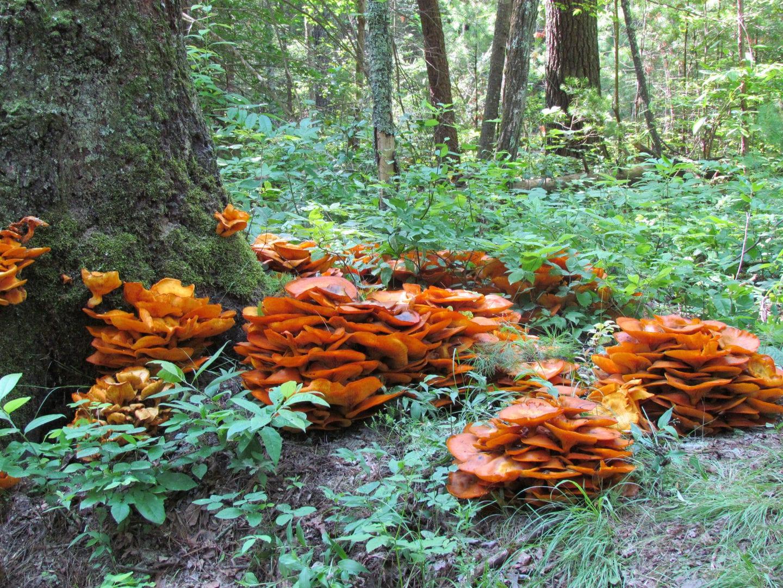 Fungi colonies growing