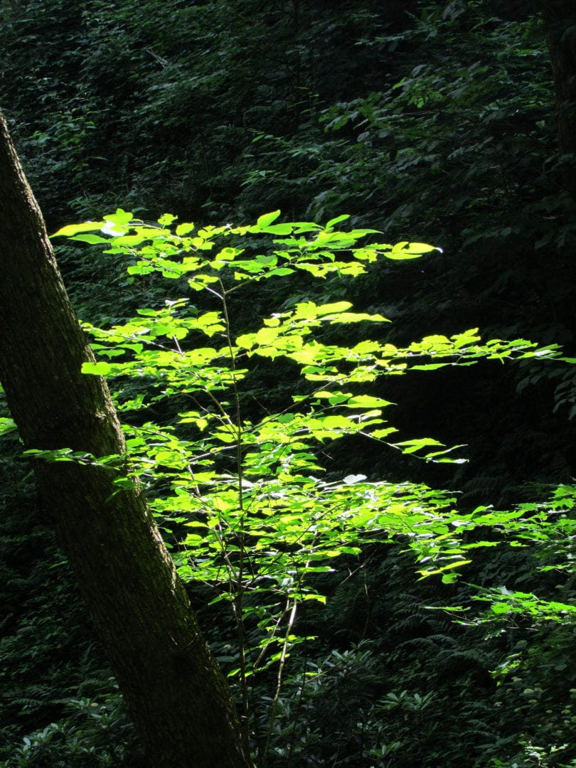 Plants in the woods
