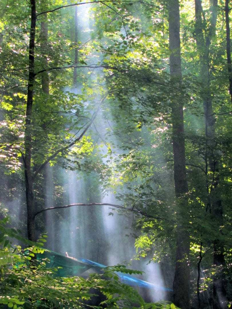 Trees filtering the sunlight in the forest