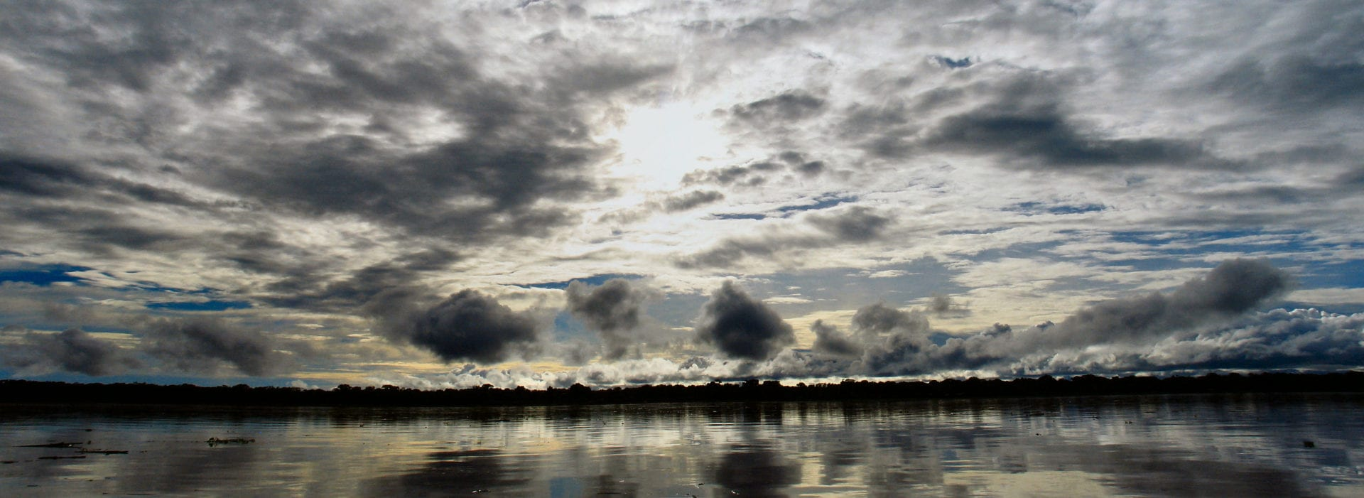 A panoramic shot of the amazon rainforest