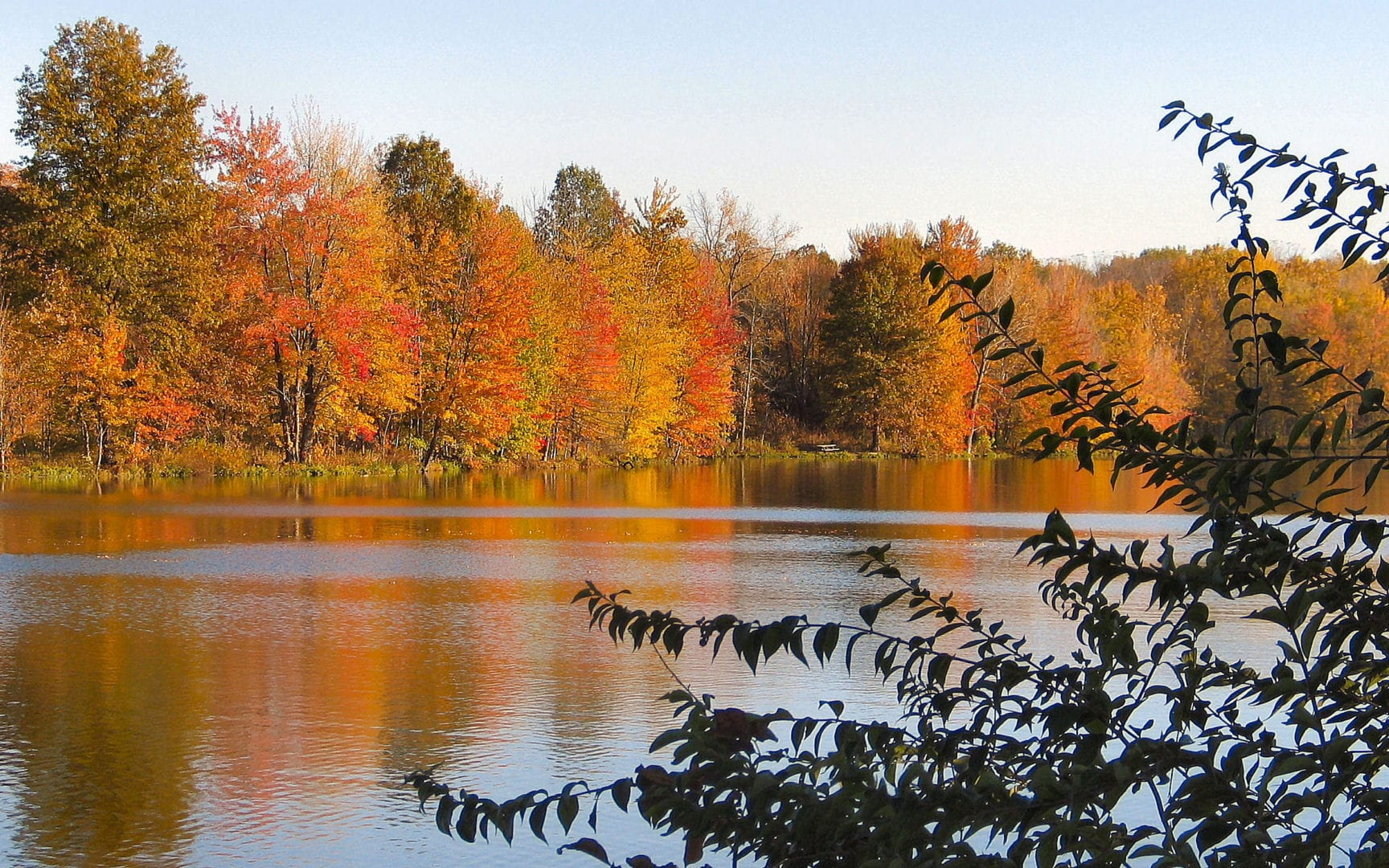 Trees with autumn leaves by the lake